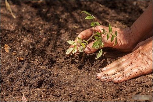 Đất sạch trồng cây