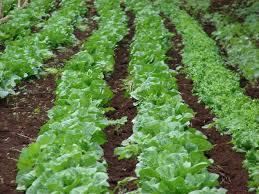 Đất dinh dưỡng trồng cây