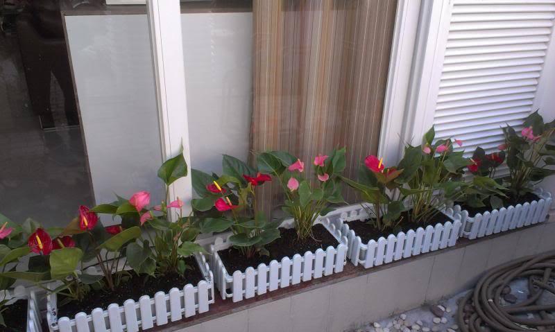 Đất dinh dưỡng Tribat trồng rau