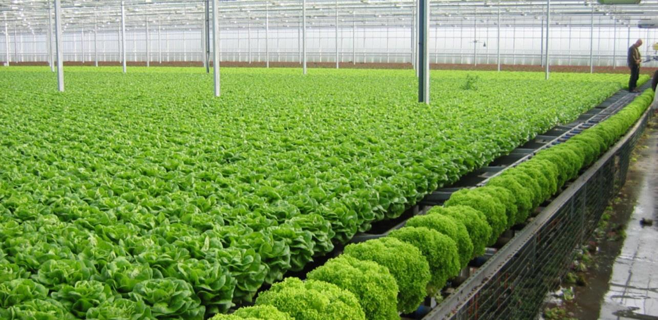 Đất sạch giàu dinh dưỡng
